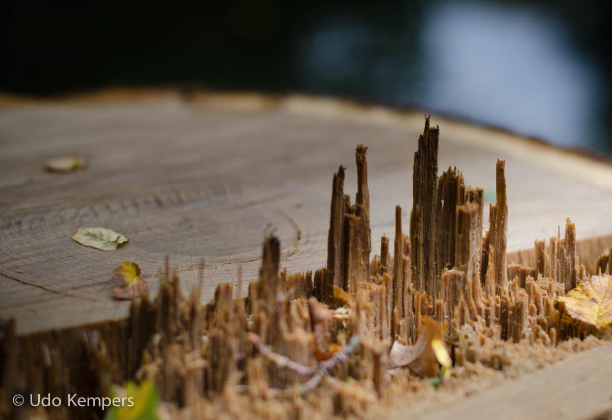 Wooden Skyline